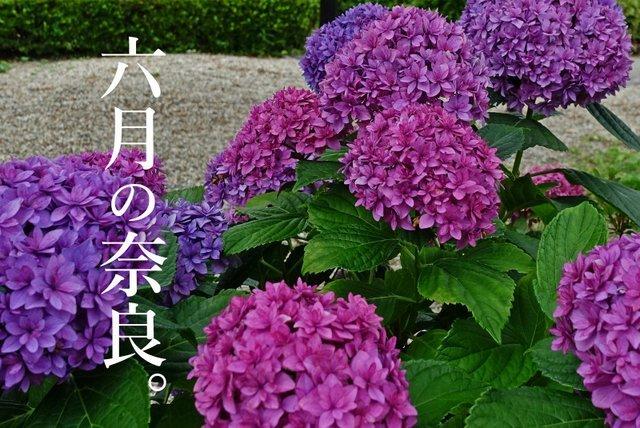 DSC00838m2c.jpg