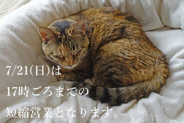 DSC01326mc.jpg