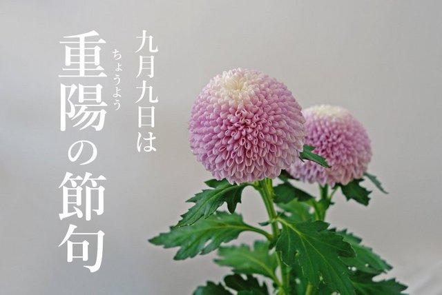 DSC03229mc.jpg